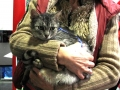 Krásná kočička Abigail z Kočičí naděje z.s. vyhlížela dnes nový domov marně... Dočká se zítra? tag Označit fotkuproduct-tagOznačit produkty