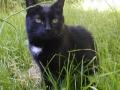 Moje první kočka Bumbroušek1990 (nalezenec) - 2005. Nikdy nezapomenu, Katka K.