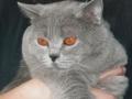 EC Churchil RO-SE, 2001 - 2008, můj sladký, něžný miláček, na kterého nikdy nezapomenu.