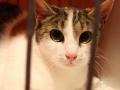 Kočka hledá nový domov