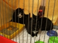 Kočky z útulku Podbrdsko