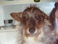1988 - 2000. Přehodil ho někdo přes plot jako štěně. Klasickej vořech. Notorický útěkář, co cestoval sám a řidiči MHD mu to tolerovali, ...