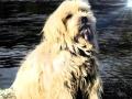 Láska není jen slovo.. Věnovánu nejlepšímu, skvělému psu mého života...