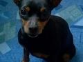 GANNY 5.3. 2006 - 7.2. 2014 Naše velké ZLATÍČKO a nejsrandovnější pes na světě