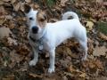 No jo podzimní procházky má Gina (Džina) ráda :D