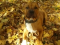 Podzimní mimikry aneb Najdi na obrázku psa... Gregorek 6,5 měsíců
