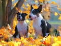 Podzimní kluci: Drago a Wolf
