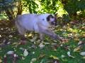 Všude kolem listy leží, to podzim po zahradě běží.