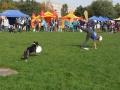 ukázky zajímavého pojetí dogfrisbee
