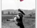 Drago miluje balonky