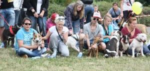 Loni se našeho Rekordního Bull srazu zúčastnil i zpěvák Matěj Ruppert se svým bulíčkem.
