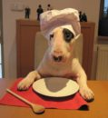 kuchař :)